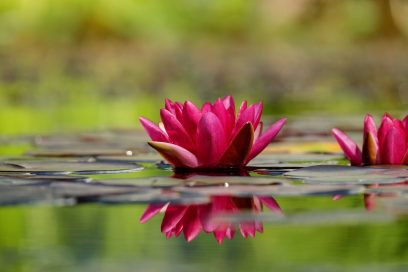 Osho Chakra Sounds meditacija