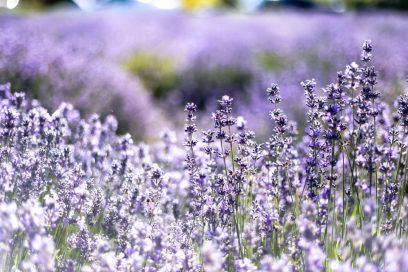 Aromaterapija u letnje vreme